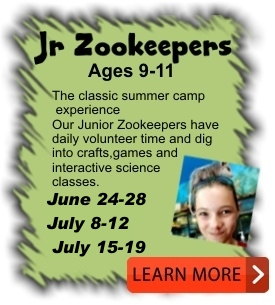 Junior Zookeepers Camp